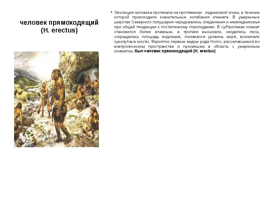 человек прямоходящий (H. erectus) Эволюция человека протекала на протяжении л...