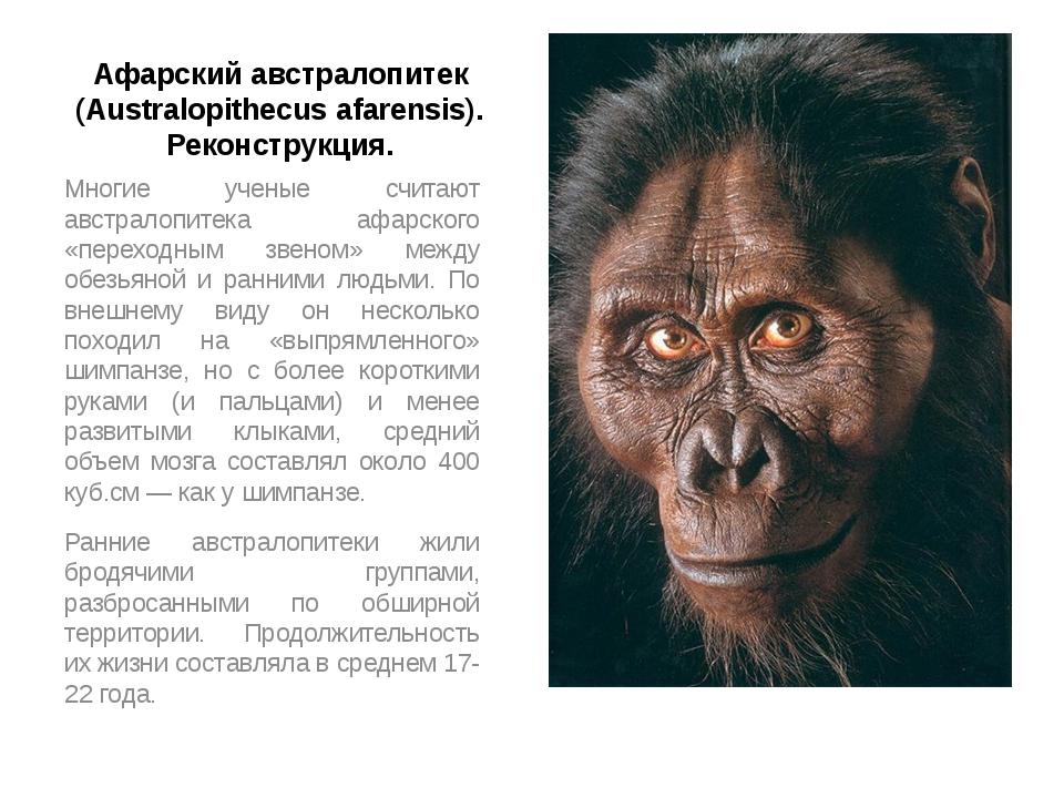 Афарский австралопитек (Australopithecus afarensis). Реконструкция. Многие уч...
