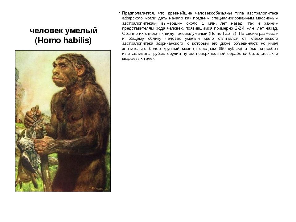 человек умелый (Homo habilis) Предполагается, что древнейшие человекообезьяны...