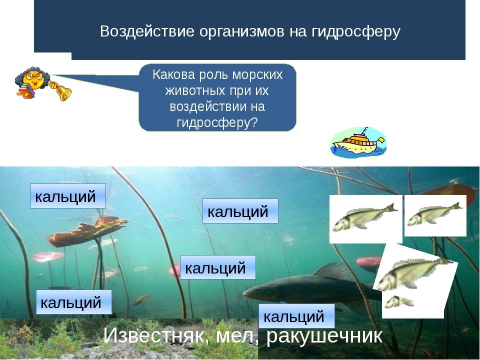 Воздействие организмов на гидросферу Какова роль морских животных при их возд...