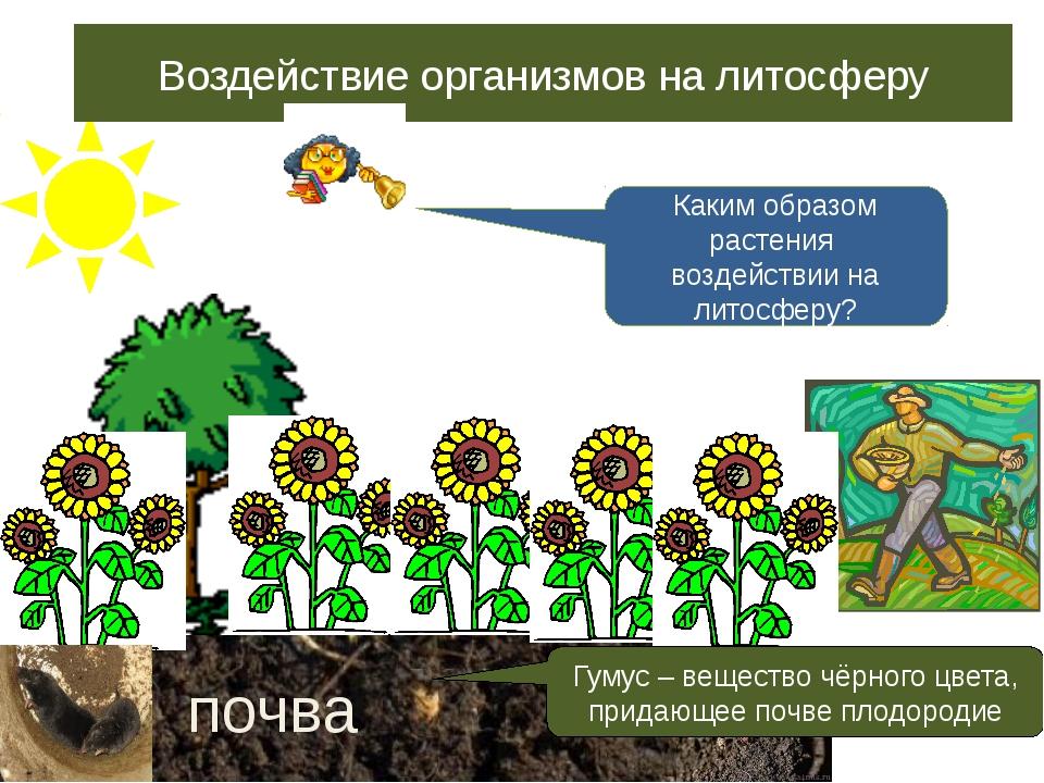 Воздействие организмов на литосферу почва Гумус – вещество чёрного цвета, пр...