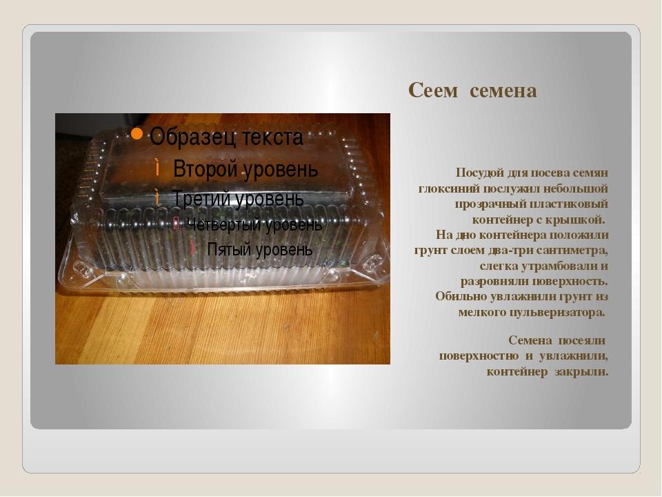 Сеем семена Посудой для посева семян глоксиний послужил небольшой прозрачный...