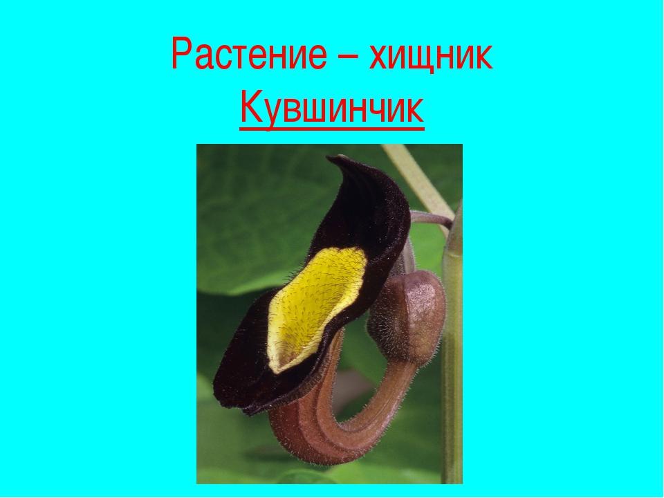Растения - рекордсмены