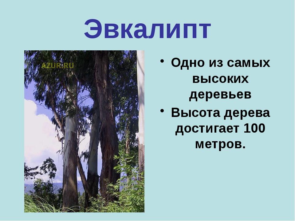 Бамбук Самая высокая трава. За каждый день она прибавляет в росте на полметра...