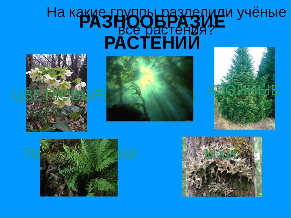 По каким признакам ученые разделили все растения на разные группы? СТЕБЛИ ЛИС...