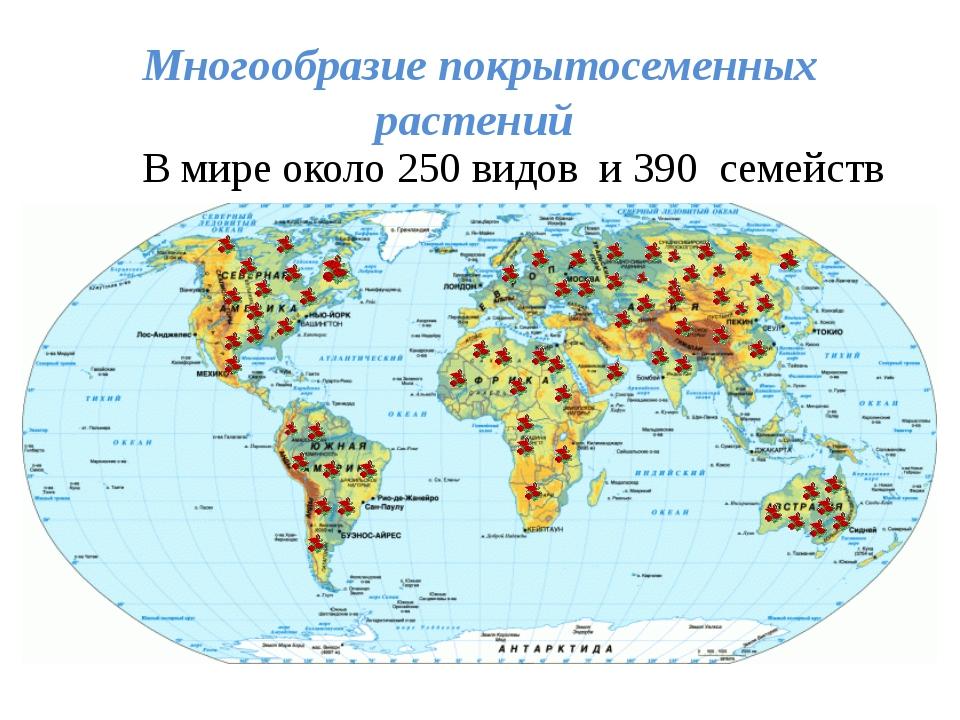 Многообразие покрытосеменных растений В мире около 250 видов и 390 семейств .
