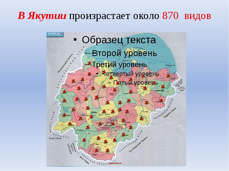 В Якутии произрастает около 870 видов