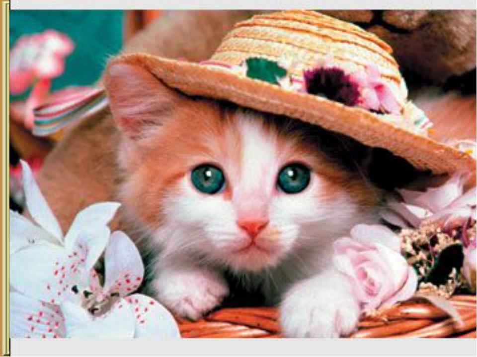 на, сидел, котенок, полу столе, на, шляпа, лежала шляпа, со, упала, стола она...