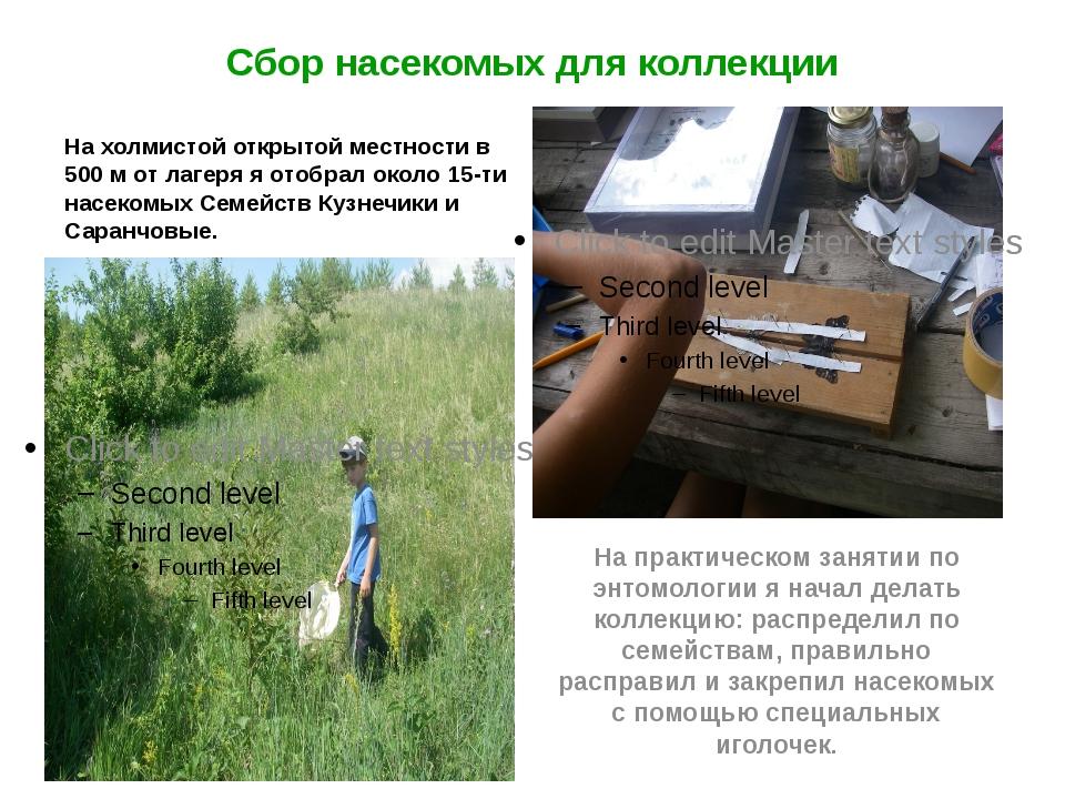 Сбор насекомых для коллекции На холмистой открытой местности в 500 м от лагер...