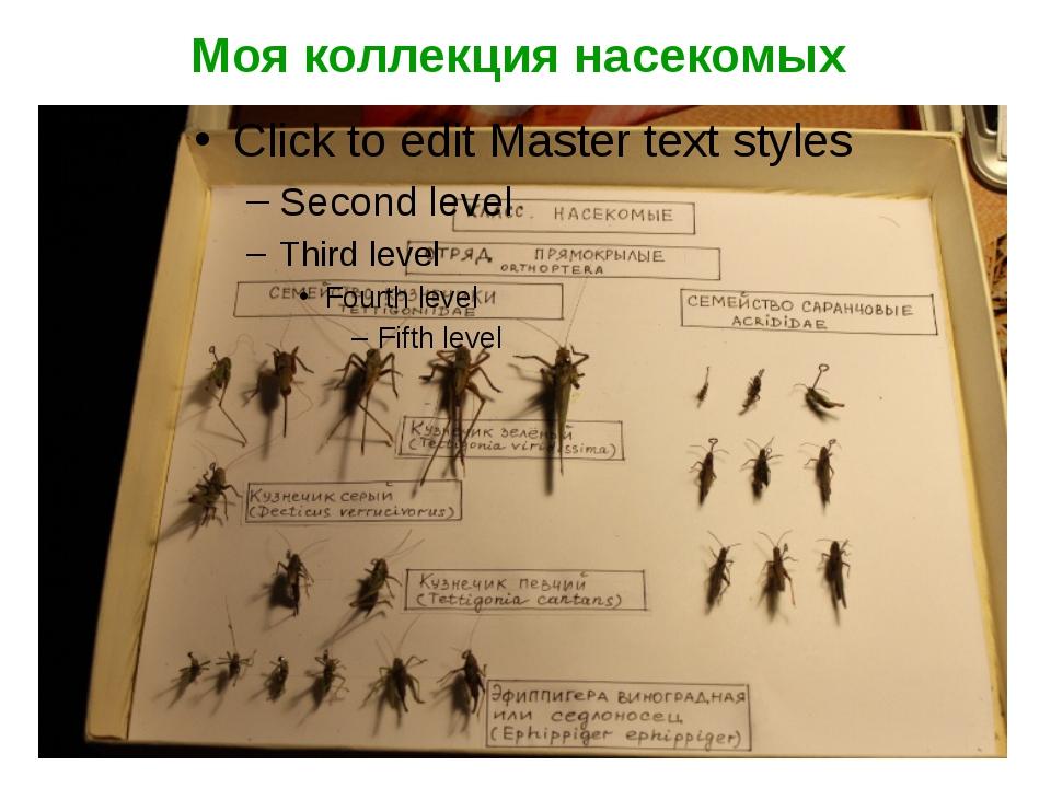 Моя коллекция насекомых