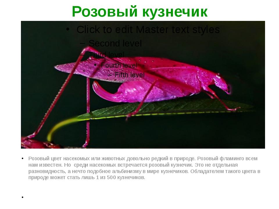 Розовый кузнечик Розовый цвет насекомых или животных довольно редкий в природ...