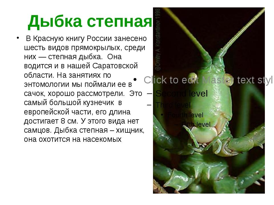 Дыбка степная В Красную книгу России занесено шесть видов прямокрылых, среди...