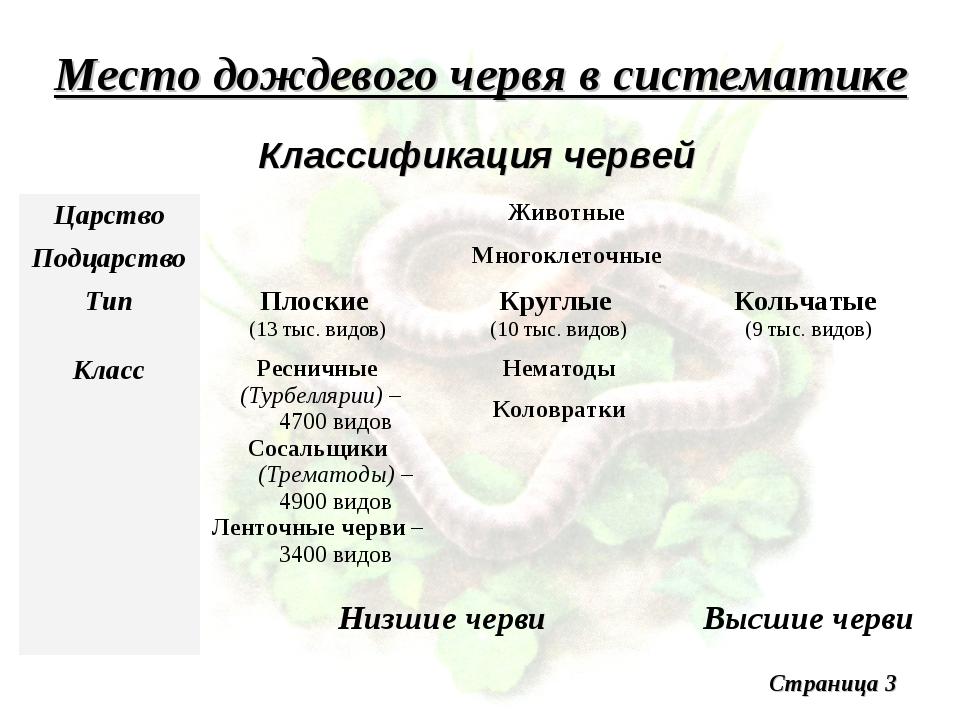 Место дождевого червя в систематике Классификация червей Малощетинковые (Олиг...