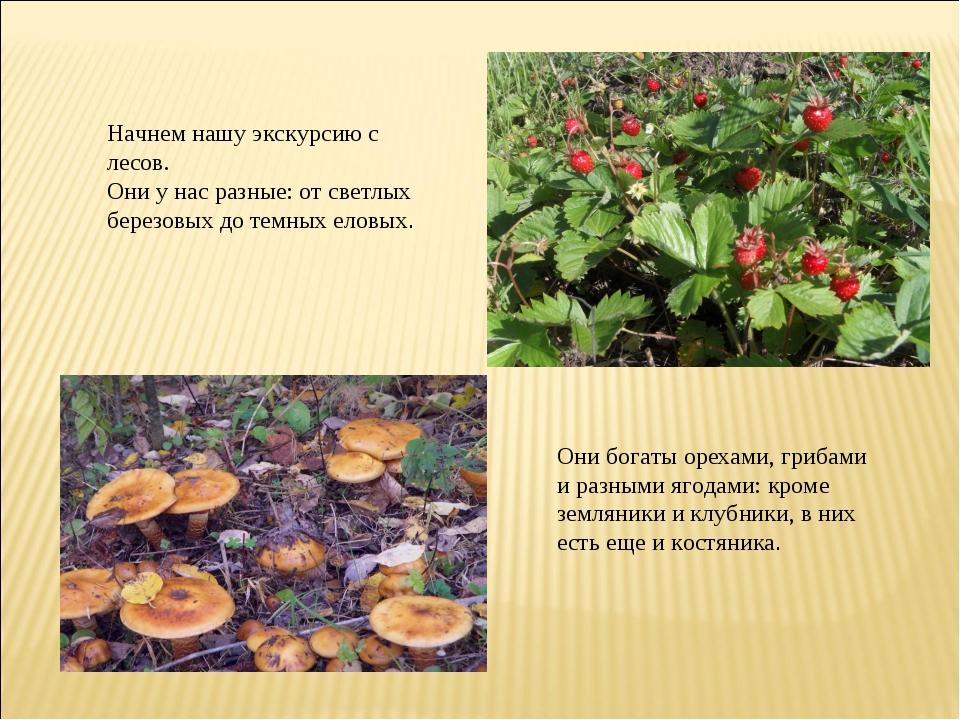 Начнем нашу экскурсию с лесов. Они у нас разные: от светлых березовых до темн...
