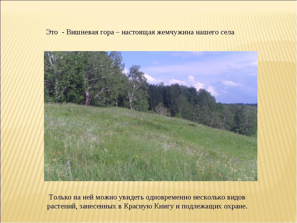 Это - Вишневая гора – настоящая жемчужина нашего села Только на ней можно уви...