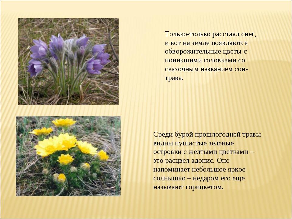 Только-только расстаял снег, и вот на земле появляются обворожительные цветы...