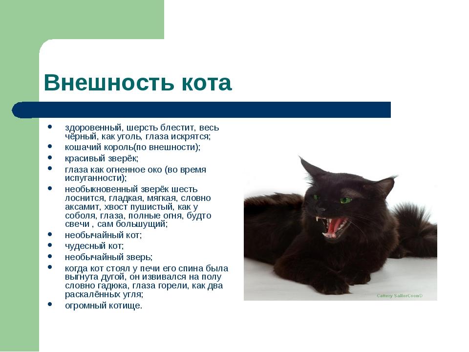 Внешность кота здоровенный, шерсть блестит, весь чёрный, как уголь, глаза иск...