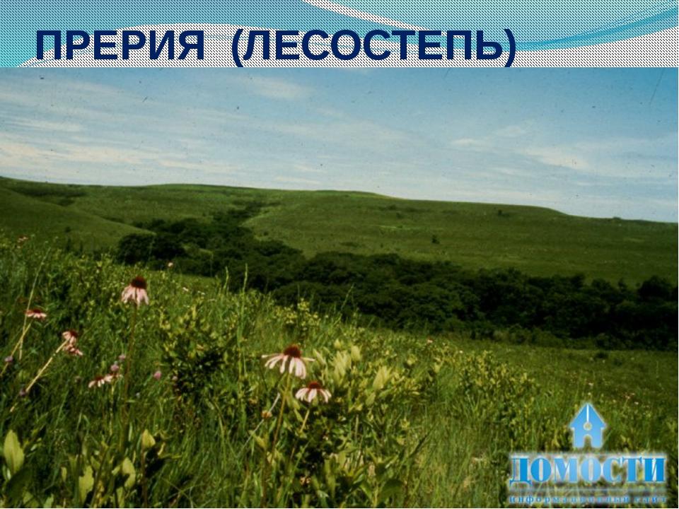 ПРЕРИЯ (ЛЕСОСТЕПЬ)