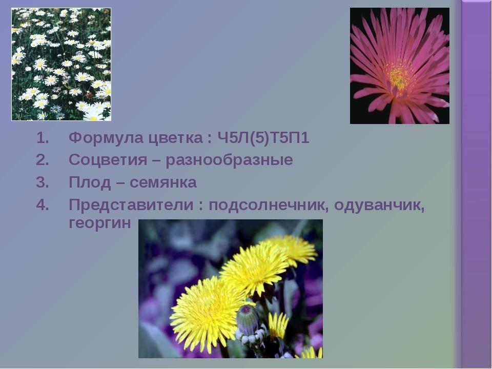 Формула цветка : Ч5Л(5)Т5П1 Соцветия – разнообразные Плод – семянка Представи...