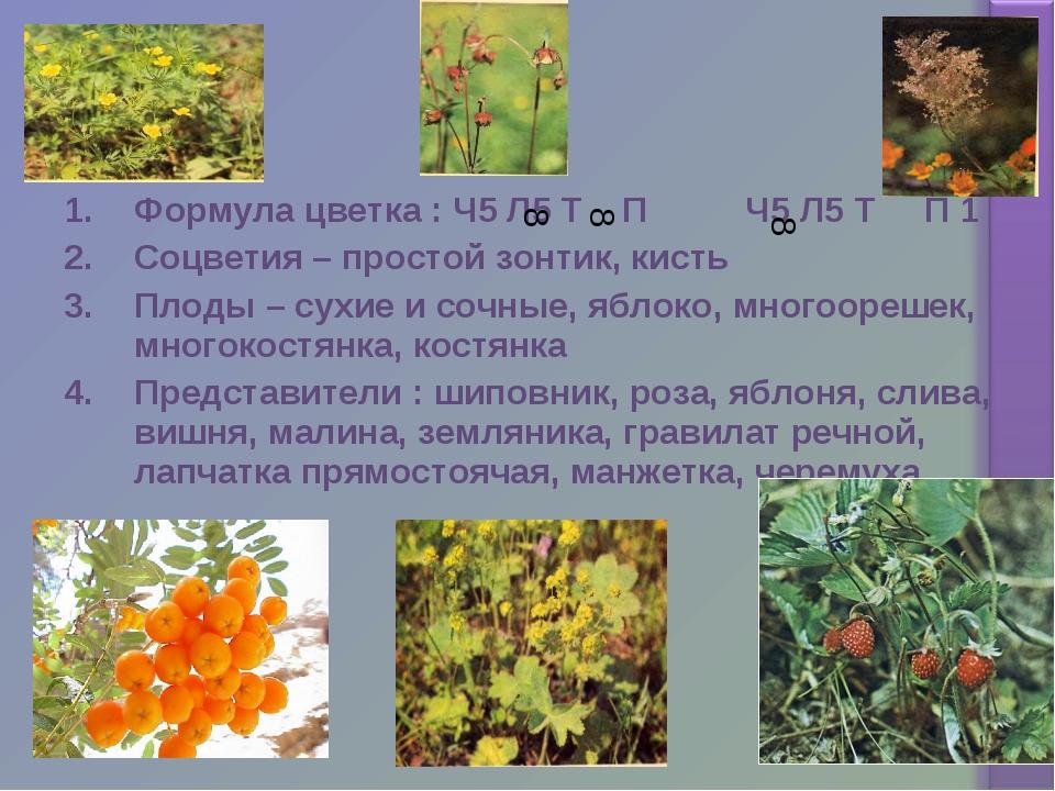 Формула цветка : Ч5 Л5 Т П Ч5 Л5 Т П 1 Соцветия – простой зонтик, кисть Плоды...