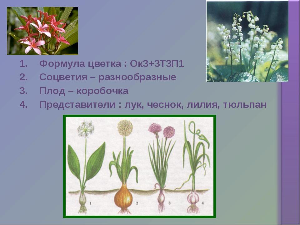 Формула цветка : Ок3+3Т3П1 Соцветия – разнообразные Плод – коробочка Представ...