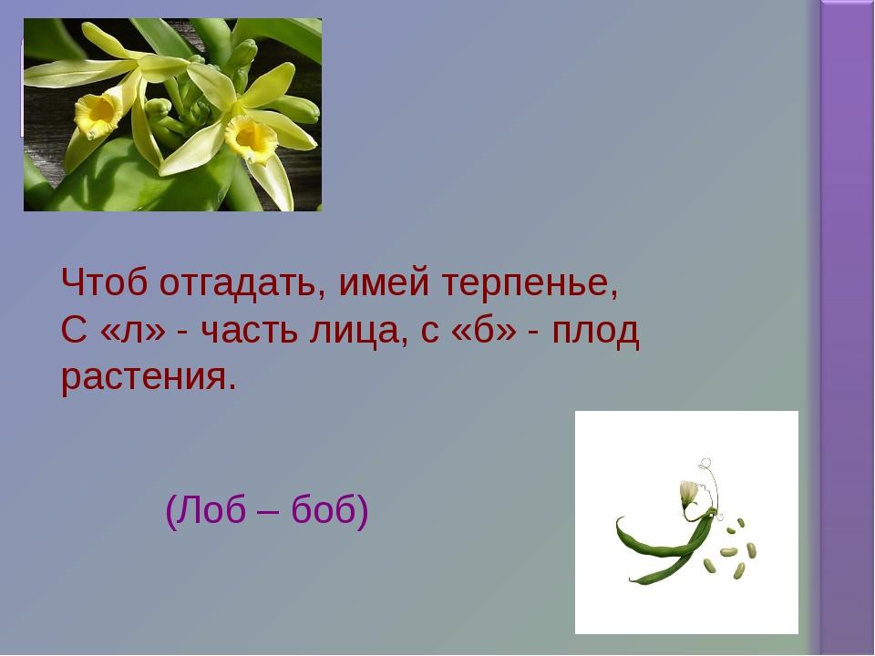 Чтоб отгадать, имей терпенье, С «л» - часть лица, с «б» - плод растения. (Лоб...