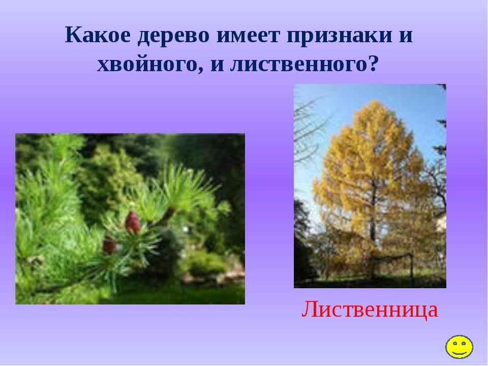 Какие грибы растут на белых ножках вдоль лесных дорожек, в издали заметных шл...