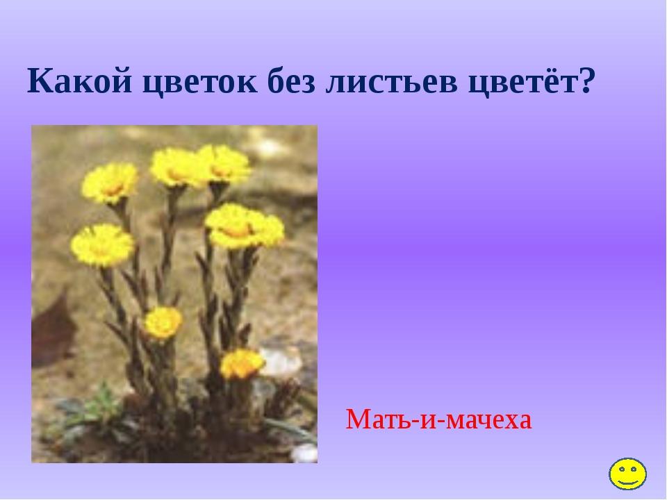 Весной или летом цветёт сирень? Весной