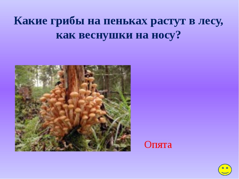 Какое травянистое растение называют дикой рябиной? Пижма