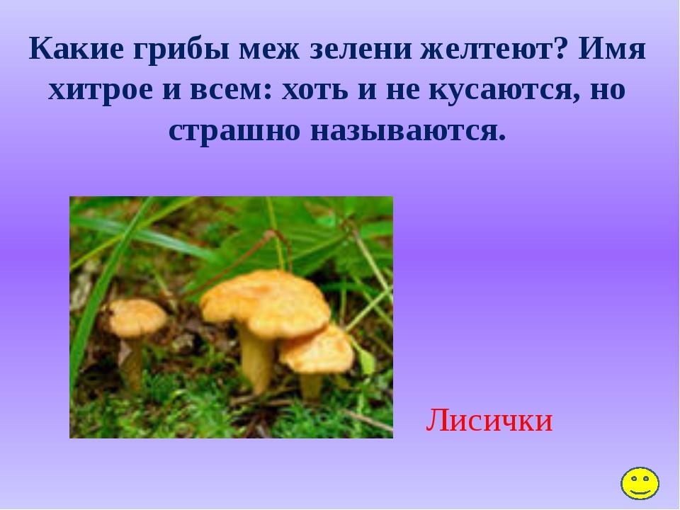 Какой цветок без листьев цветёт? Мать-и-мачеха