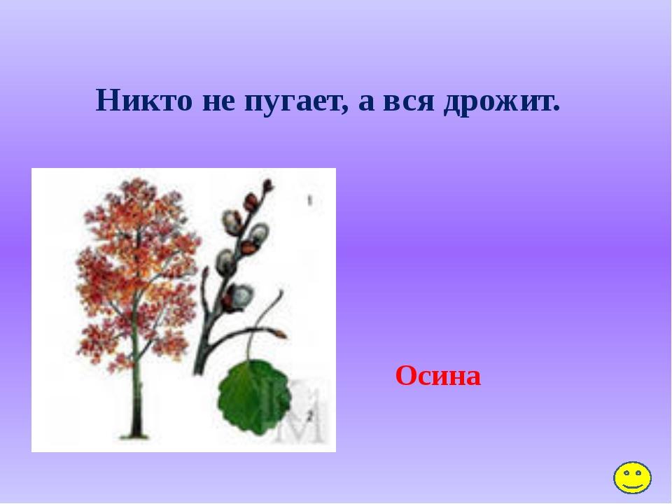 Блицопрос: А) Что делает ёж зимой? Спит, забравшись с осени в гнездо из трав...