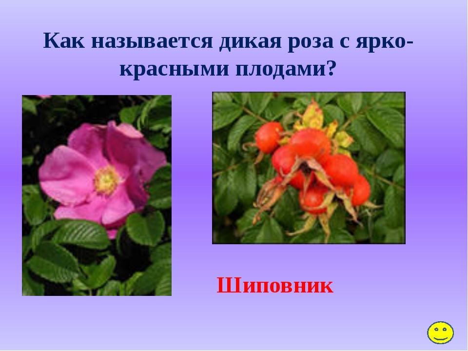 Почему ландыш называют майским? Цветёт весной, в мае.