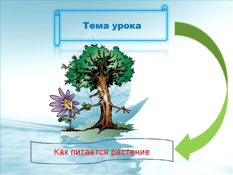 Как питается растение