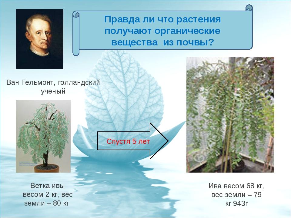 Ветка ивы весом 2 кг, вес земли – 80 кг Ван Гельмонт, голландский ученый Ива...