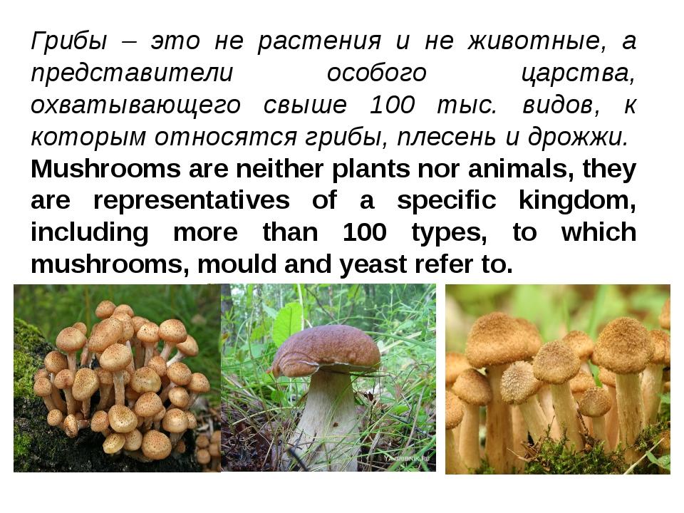 Грибы – это не растения и не животные, а представители особого царства, охват...
