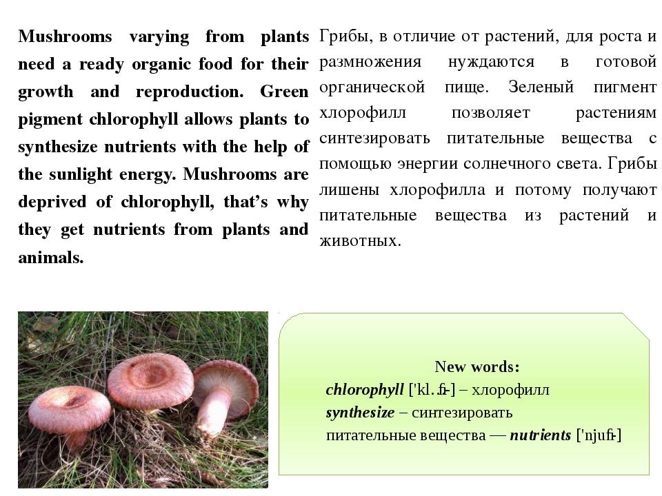 New words: chlorophyll ['klɔː-] – хлорофилл synthesize – синтезировать питате...