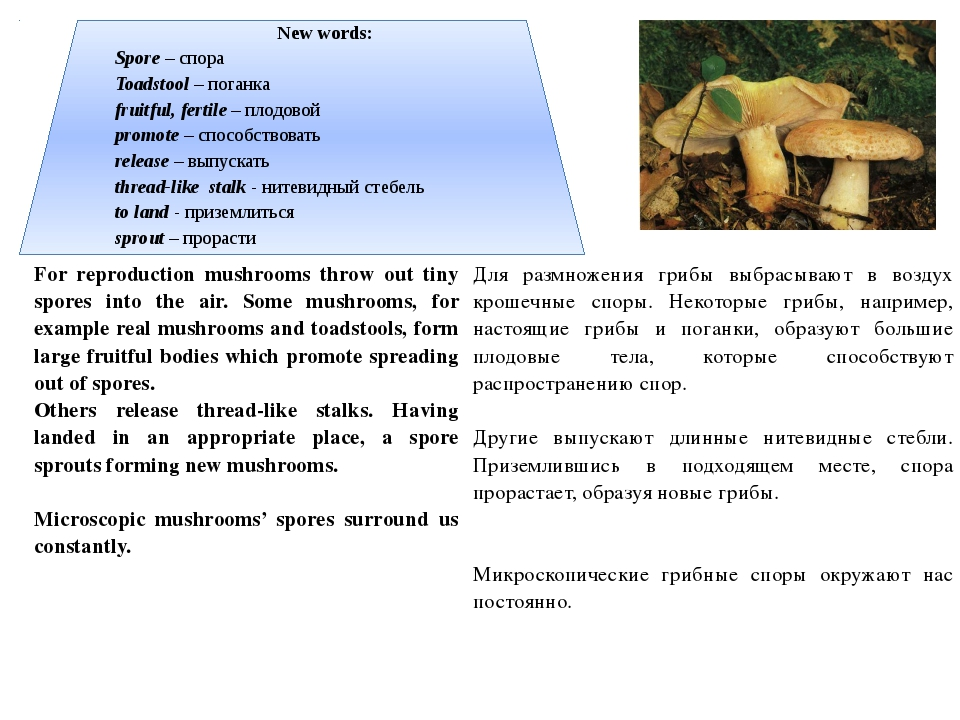 New words: Spore – спора Toadstool – поганка fruitful, fertile – плодовой pro...