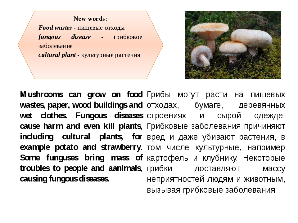 New words: Food wastes - пищевые отходы fungous disease - грибковое заболеван...