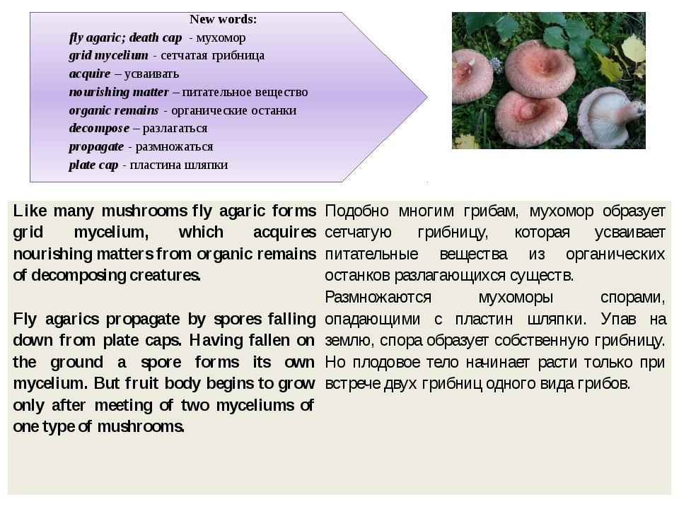 New words: fly agaric; death cap - мухомор grid mycelium - сетчатая грибница...