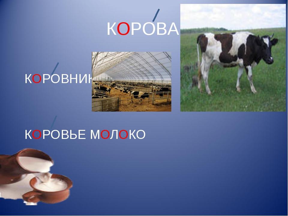 КОРОВА КОРОВНИК КОРОВЬЕ МОЛОКО