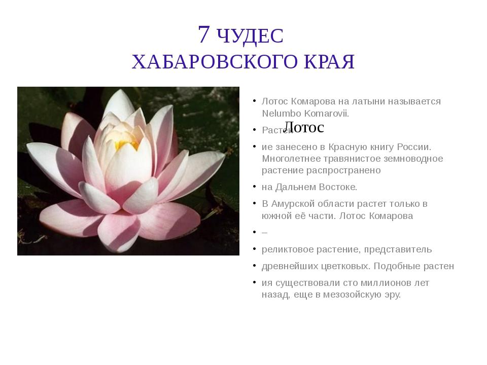 7 ЧУДЕС ХАБАРОВСКОГО КРАЯ Лотос Комарова на латыни называется Nelumbo Komarov...