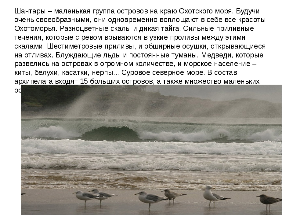 Шантары – маленькая группа островов на краю Охотского моря. Будучи очень свое...