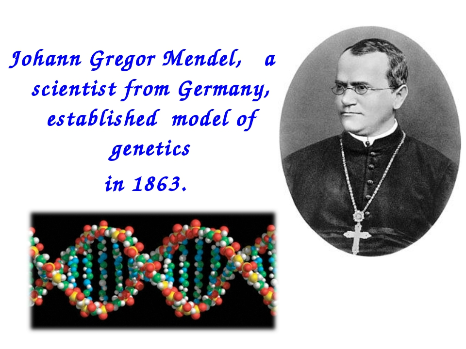 Johann Gregor Mendel, a scientist from Germany, established model of genetics...