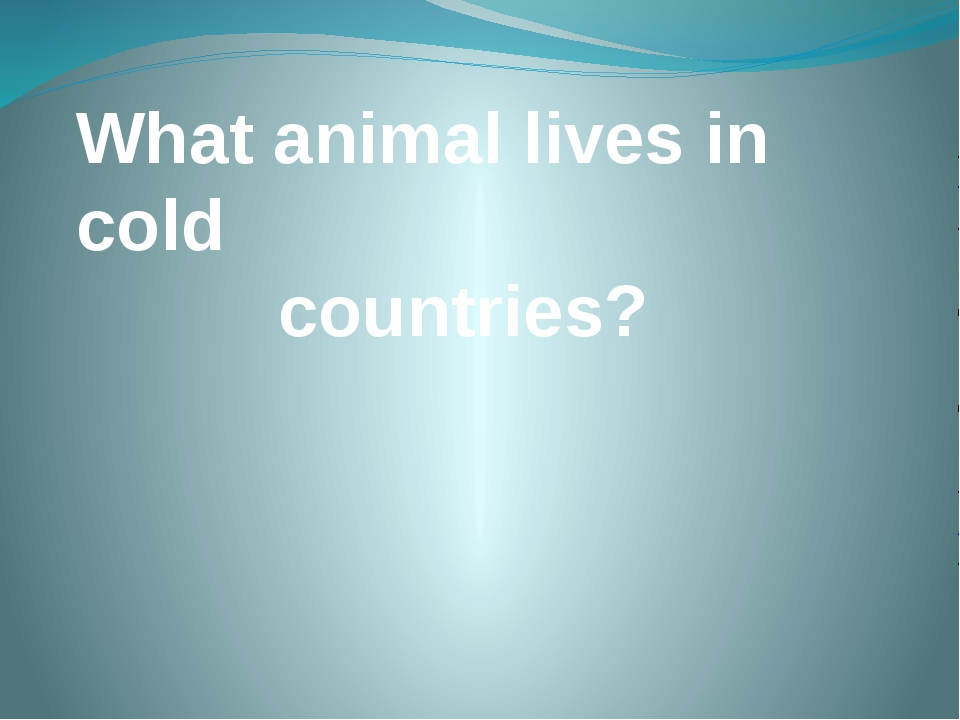 What animal lives in cold countries?