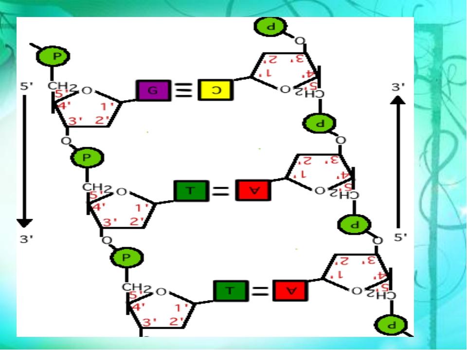 АЗОТИСТЫЕ ОСНОВАНИЯ, ВХОДЯЩИЕ В СОСТАВ РНК И ДНК