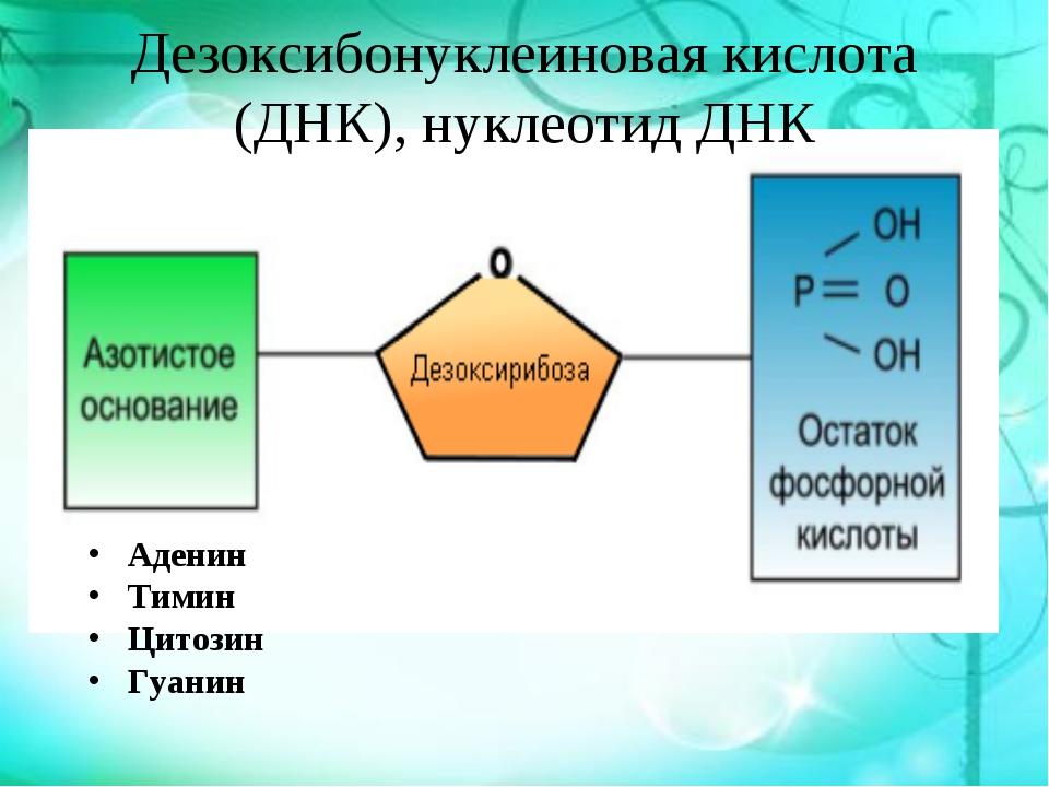 Дезоксибонуклеиновая кислота (ДНК), нуклеотид ДНК Аденин Тимин Цитозин Гуанин