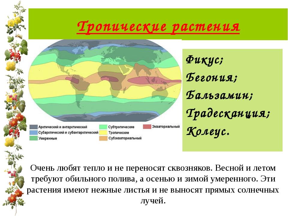 Фикус; Бегония; Бальзамин; Традесканция; Колеус. Тропические растения Очень л...