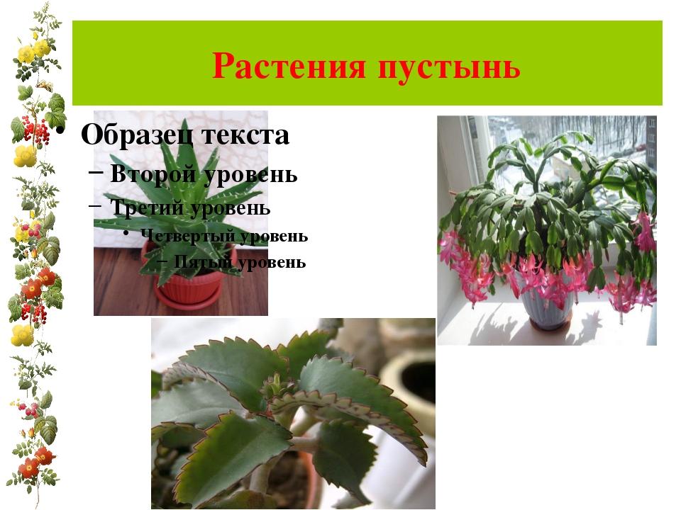 Растения пустынь