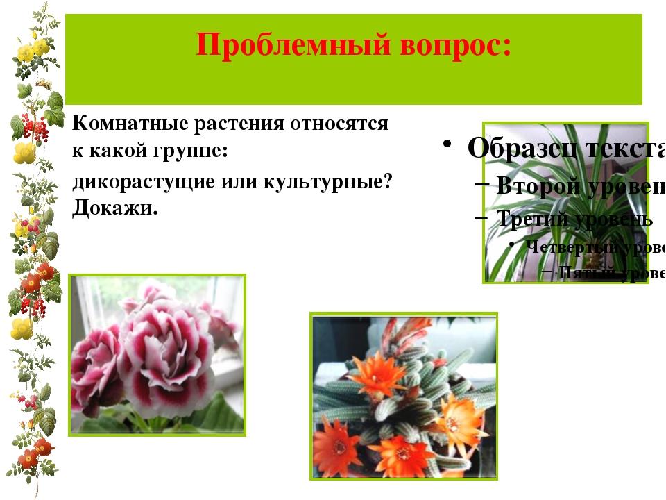Проблемный вопрос: Комнатные растения относятся к какой группе: дикорастущие...