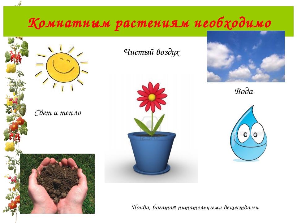 Картинка для чего нужна вода растениям